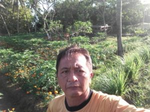 Kebun Pepaya Calina 2018 di Palasan Tumbu (2)