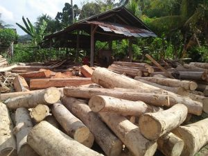 Glondong-Plat Kayu siap Proses